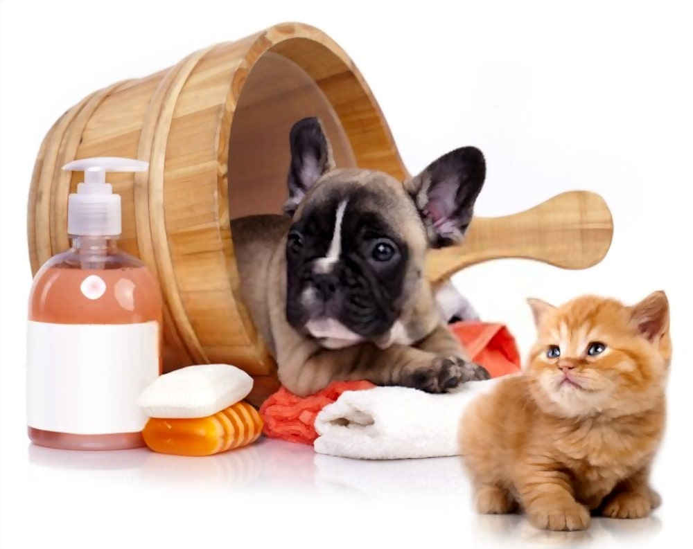 Bath your cat and dog with dry shampoo