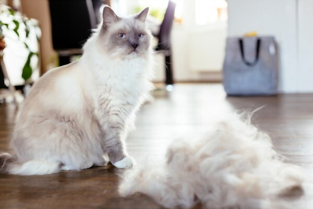 Best brush for Ragdoll cat