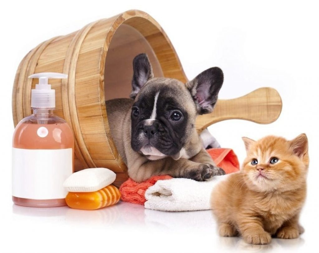 Cat and dog bath in wooden tub