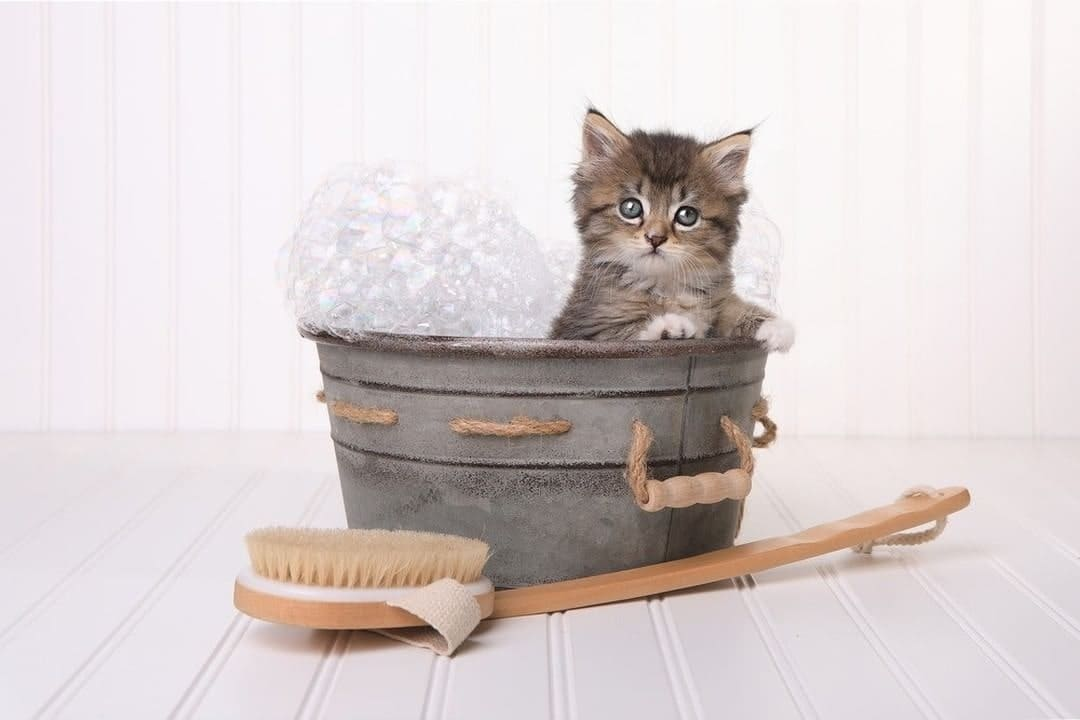 How to clean a cat without water