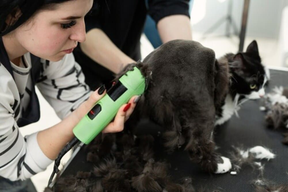 The vet uses an electric shaving machine for the cat