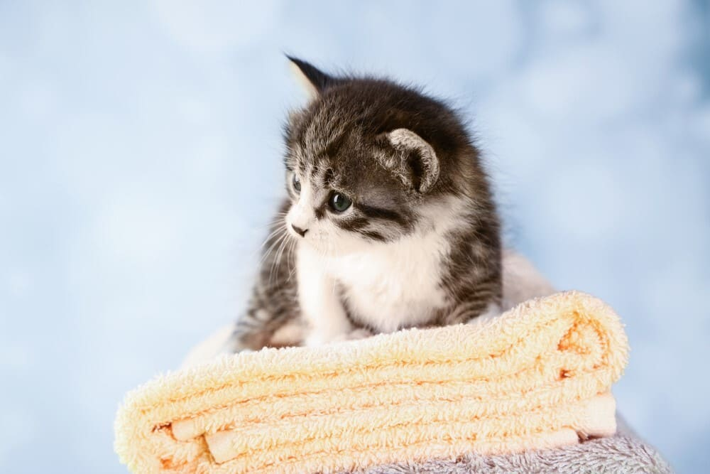How to remove oil from cat fur