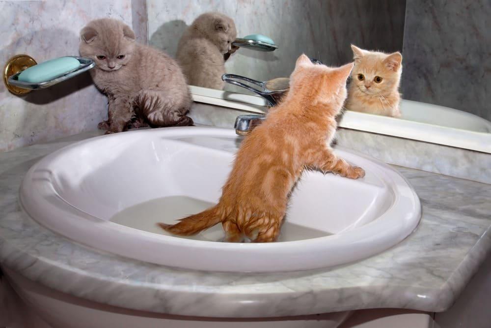 Little kittens bathing in the sink