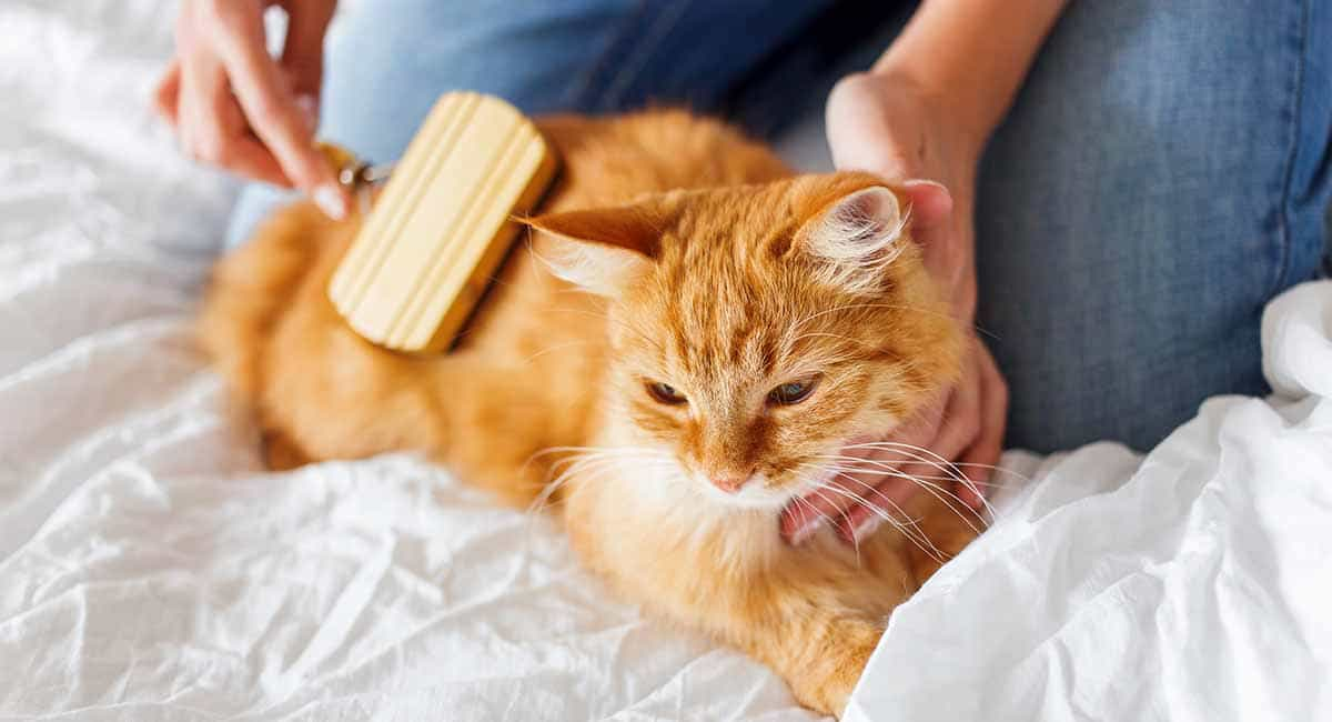 How to reduce shedding in cats
