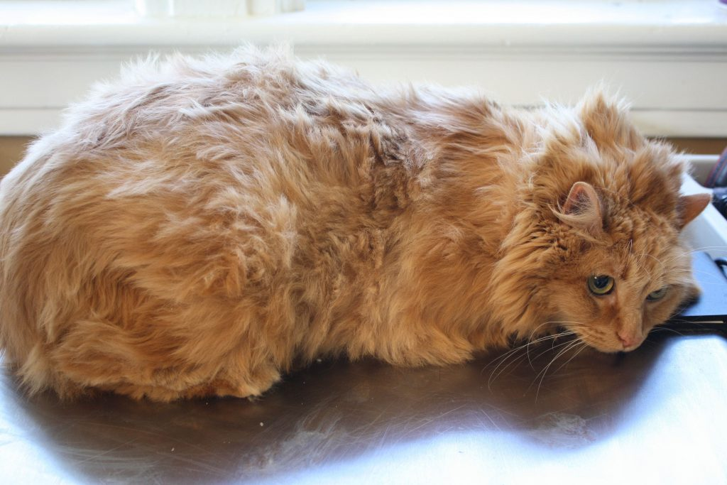 A matted cat lay on floor