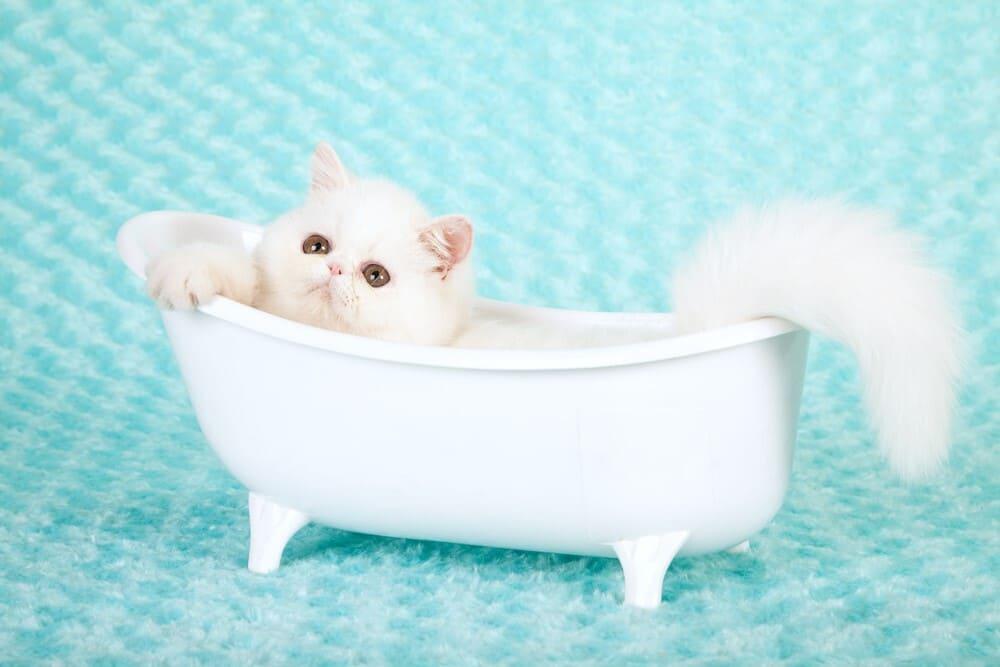 Kittens bath